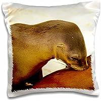 Kike Calvo Galapagos - Galapagagos sea lion,Zalophus wollebaeki,suckling from mother at Gardner Bay Galapagos Ecuador - 16x16 inch Pillow Case