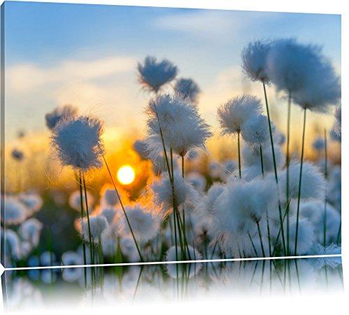 Pracht Gerahmt (Baumwollblüten im Sonnenuntergang Format: 120x80 auf Leinwand, XXL riesige Bilder fertig gerahmt mit Keilrahmen, Kunstdruck auf Wandbild mit Rahmen, günstiger als Gemälde oder Ölbild, kein Poster oder Plakat)