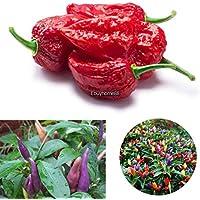 Portal Cool Super picante: 10 / 40Pcs Peter Pepper Chili multicolor decoración Pepper Vegetable Seeds Ehe8