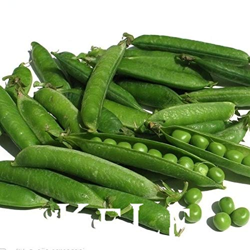 FARMERLY Samen Paket: Großer Verkaufs-20Pcs / bag Sweet pea Bonsai, köstliche Gemüsesamen, für DIY & amp; Garten China Sweet Pea