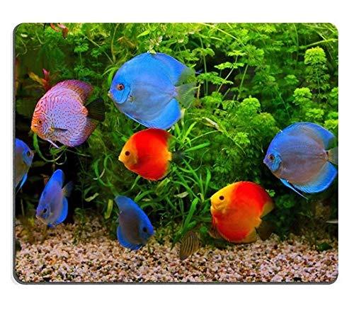 Yanteng 17P00622 creatività di Alta qualità Mousepad Gaming Mouse Pad Discus Symphysodon Multi Colorati ciclidi nell'acquario Pesci d'Acqua Dolce nativi