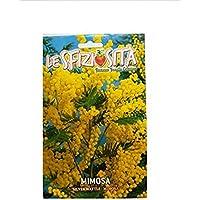 TROPICA - Mimosenbaum-Silberakazie (Acacia dealbata) - 35 Samen