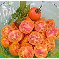 Portal Cool Cereza del tomate - Isis caramelo (25 semillas)