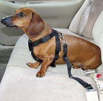 Winnipet Laisse de sécurité voiture pour chien