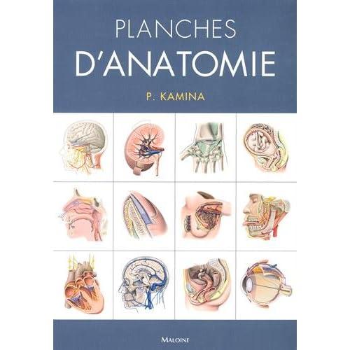 Planches d'anatomie