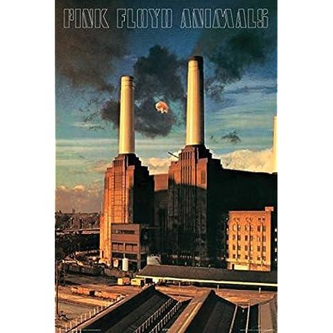 Pink Floyd - Animals Poster (60,96 x 91,44 cm)