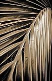 """Bilderdepot24 Vlies Fototapete """"Palmenblatt - Malediven - sephia"""" 100x150 cm - direkt vom Hersteller, inklusive Kleister"""