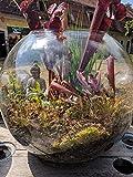 Fleischfressende Pflanzen komplett Set