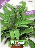 Sementi di piante aromatiche e...