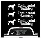 Siviwonder Continental Bulldog Bully - 3er Set Auto Aufkleber Autoaufkleber Hundemotiv Hundeaufkleber autoaufkleber Hund Folie Aufkleber weiß