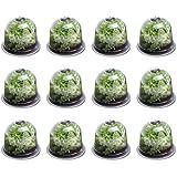 IDMarket - Cloche à salades x12 Serre de Protection pour Plants