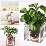 Jardin Transparente du Pont de Pot de Fleurs avec système d'arrosage Automatique Plastique Pot de...