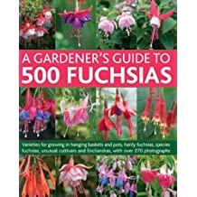 A Gardener's Guide to 500 Fuchsias: Varieties for Growing in Hanging Baskets and Pots, Hardy Fuschias, Species, Unusual Cultivars and Encliandras, with Over 270 Photographs by John Nicholass (2012-11-01)