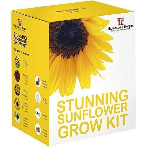Thompson & Morgan Crescere Kit Regalo Scatole Stupendo Girasole