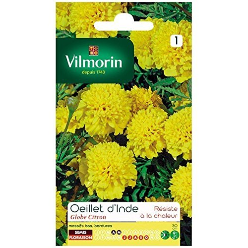 Vilmorin - Sachet graines Oeillet d'inde Globe Citron