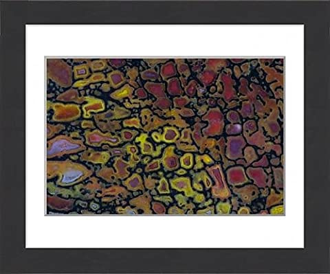 Framed Print of Colorful Petrified Dinosaur Bone