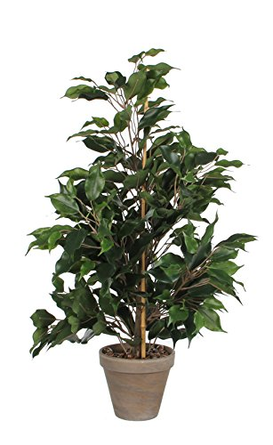 MICA Decorations 981063 Exotica Ficus in Stan Topf, Polyester