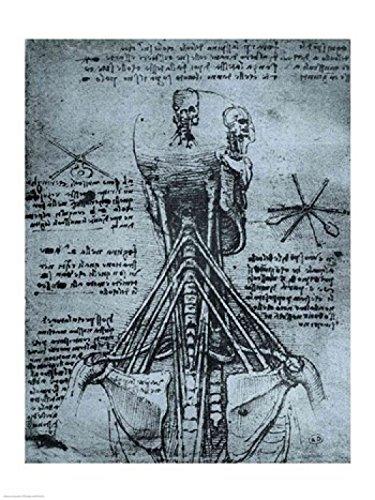 The Poster Corp Leonardo Da Vinci - Knochenstruktur des Menschlicher Hals und Schulter Kunstdruck (45,72 x 60,96 cm) (Da Vinci Hals)