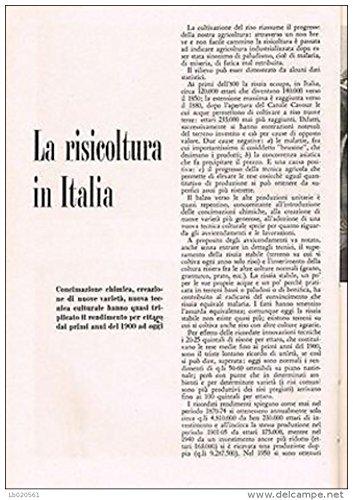 Aldo Pagani - LA RISICOLTURA IN ITALIA