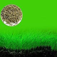 Emvanv Fish Tank Plante de décoration pour aquarium aménagement paysager Prospects Graines de gazon de jardin Plante de premier Plan Mini Feuille Herbe
