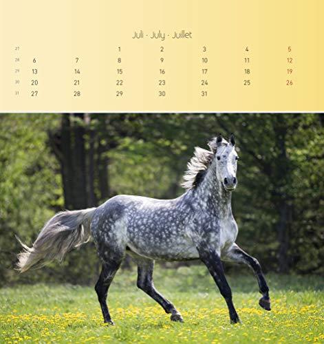 Pferde 2020 - Postkartenkalender (16 x 17) - Horses - zum aufstellen oder aufhängen - Geschenkidee - Tierkalender - Gadget