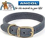 Ancol & bikes4life 46–56cm L blau Leder Timberwolf Hundehalsband (British Made)