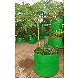 Evergreen Plastic Big Size Terrace Gardening Grow Bag for Fruits, Banana, 24x24inch, 2x2ft (EA11, Green)