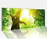 Acrylglasbild 100x40cm Baum Baumkrone Wald Sonne Licht Landschaft grün Acrylbild Acryl Druck Acrylglas Acrylglasbilder 14A9715, Acrylglas Größe1:100cmx40cm