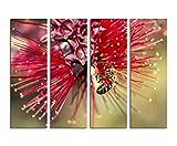 Fotoleinwand 4Teile je 90x30cm Naturfotografie – Roter Zylinderputzer mit Honigbiene