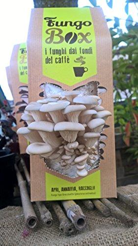 Galleria fotografica FungoBox: il Kit per Coltivare in Casa Funghi Ostrica (Commestibili e Buoni), dai Fondi del Caffè espresso - Un regalo ideale