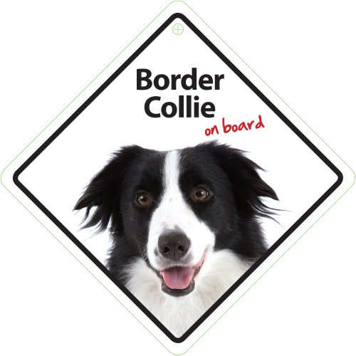 border-collie-on-board-autoschild-magnet-steel