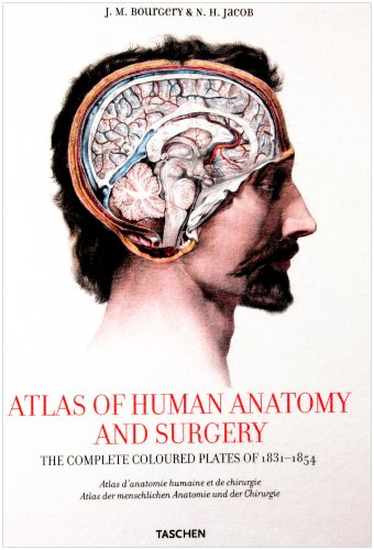 XL-BOURGERY ATLAS ANATOMIE