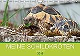 Meine Schildkröten (Wandkalender 2019 DIN A4 quer): Bilder von meiner Schildkrötengruppe (Monatskalender, 14 Seiten ) (CALVENDO Tiere)