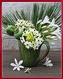 1art1 Blumen Poster Kunstdruck und Kunststoff-Rahmen - Fresien In Vase, Catherine Beyler (50 x 40cm)