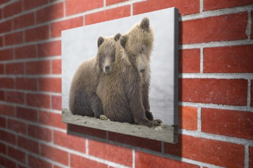 2 Grizzly Bears Animals Gallery Framed Canvas Art Picture Print