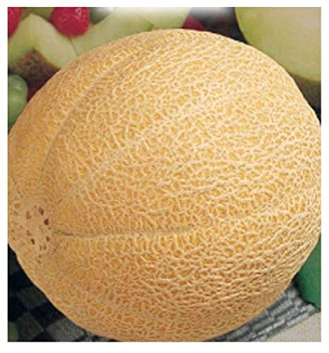90 Aprox- Semillas de melón Galia - Cucumis Melo en paquete original Made in Italy - Meloni