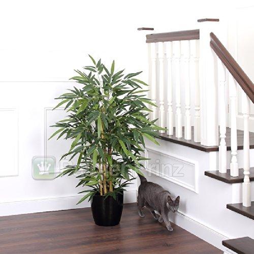 SALE: Exklusiver ROYAL Bambus ca. 120 cm getopft!
