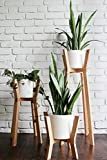#7: Plant Stand Hand Made in india Modern Planter - Modern Plant Stand - Plant Stand - Plant Stand Wood - Plant Stands Indoor - Minimalist Planter - Wood Decor - Plant Table Home Decor - Set of 3, Small Medium Large by D'sign Lab