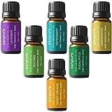 Zenpure Aceites Esenciales Aromaterapia Set de Regalo, 6 Botellas / 10 ml Cada uno, 100% Puro (Lavanda, Arbol de té, Eucalipto, Lemongrass, Naranja Dulce, Hierbabuena)