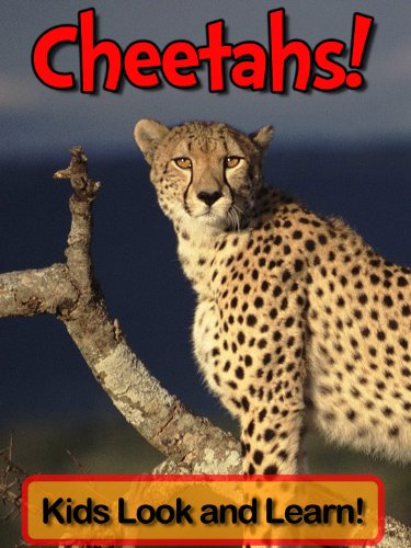 Cheetahs! Learn About Cheetahs and Enjoy Colorful Pictures - Look and Learn! (50+ Photos of Cheetahs) (English Edition)