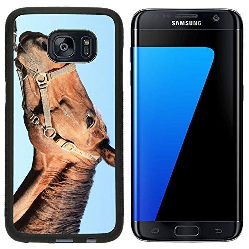 msd-premium-samsung-galaxy-s7-edge-aluminum-backplate-bumper-snap-case-bay-horse-goes-on-a-green-mea