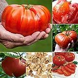 Portal Cool 2: Home Gardening Gemüse Obstpflanze Frische Große Tomatensamen Btl8