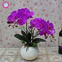 Semillas Semillas 50pcs Phalaenopsis raras hermosas Semillas Bonsai popular de la flor DIY flor de cuatro estaciones de orquídeas Semillas de flores