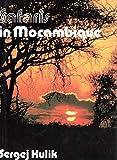 Safaris in Mocambique - Sergej Kulik