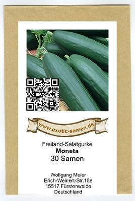 Freiland-Salatgurke - Moneta - bitterfrei - 30 Samen von exotic-samen bei Du und dein Garten