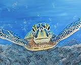 (sehr große) Schildkröte von Ed capeau 48x 36Giclée-Edition Kunstdruck Poster Wall Decor, unter dem Meer Sealife Tropical Ocean (Oversized)