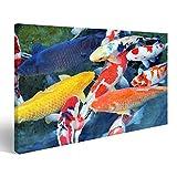 islandburner Bild Bilder auf Leinwand Mehrere Koi Karpfen in Einem Teich Wandbild Leinwandbild Poster DCU