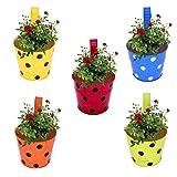 #5: Cinagro - Set Of 5 -Dotted Railing Planter, Plant Holder (Maroon, Orange, Blue, Yellow, Lemon)