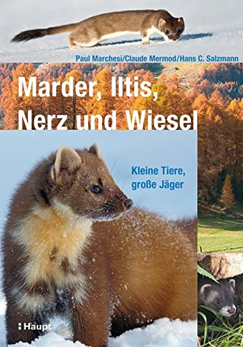 Marder, Iltis, Nerz und Wiesel: Kleine Tiere, große Jäger