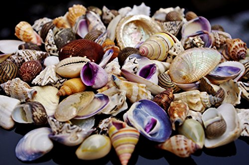 100g-small-sea-shells-mix-2-beach-mixed-seashells-shell-for-craft-and-display